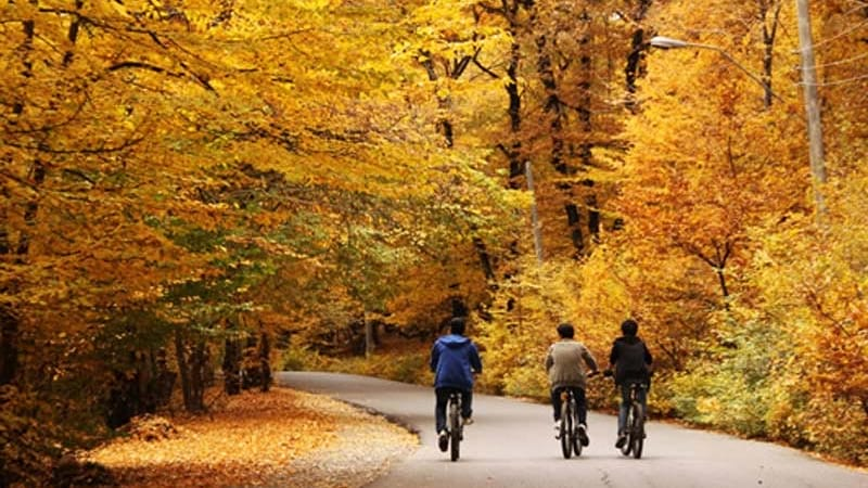 alale park in fall with astonish trees amazing road for bike near gorgan
