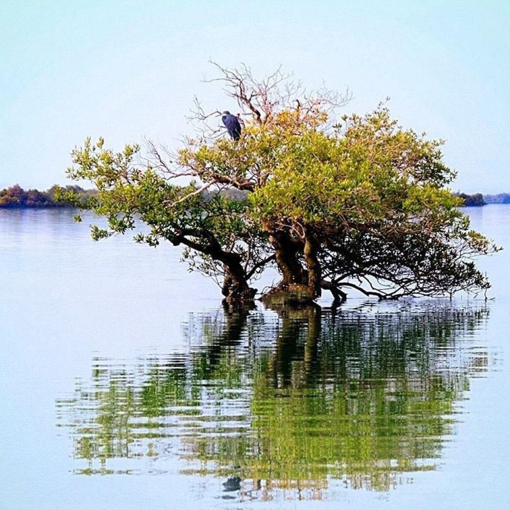 Mangrove Forests of Qeshm