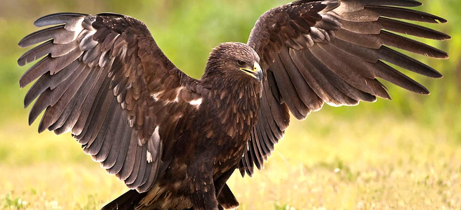 See in Eagle birds Iran birdwatching tours easy go travel Agency