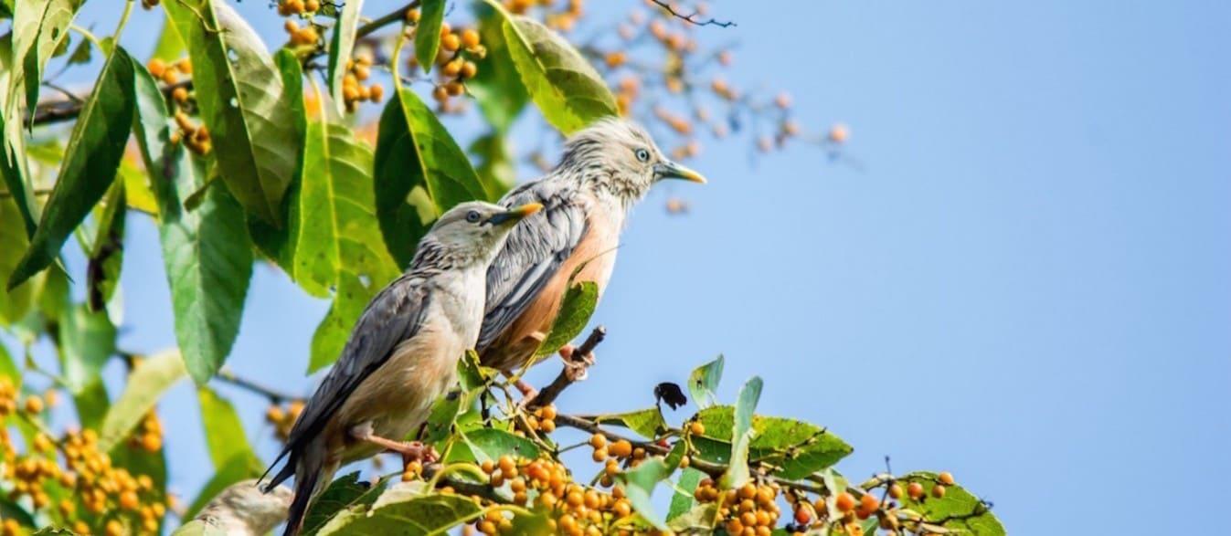 Tour of free birds in Iran's wildlife