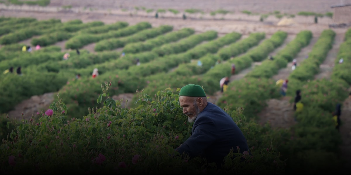 Iranians are one of the first producers of rosewater and perfume in the world
