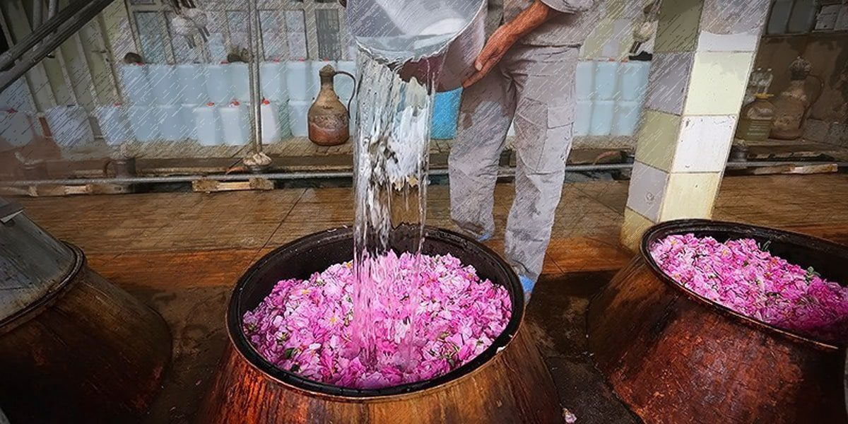 When is Kashan rose water festival