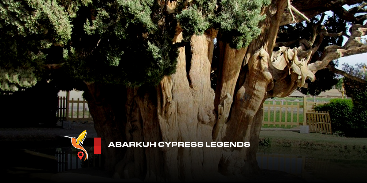 Abarkuh Cypress Legends and myths from ancient persia