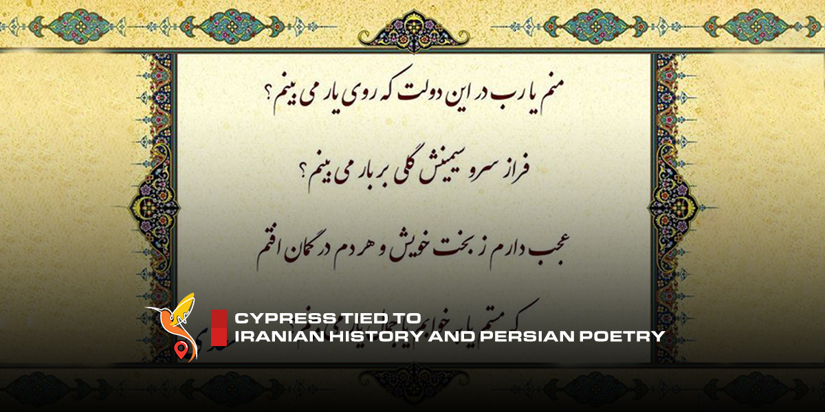 Cypress-tied-to-Iranian-history-and-Persian-poetry