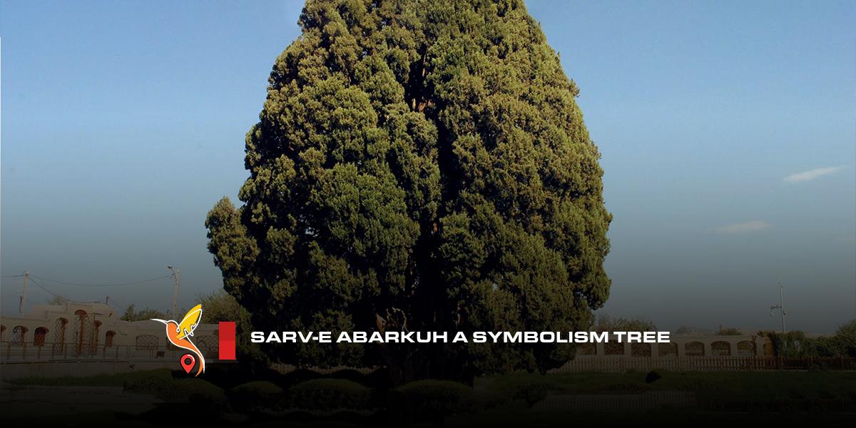 Sarv-e-Abarkuh-a-symbolism-tree