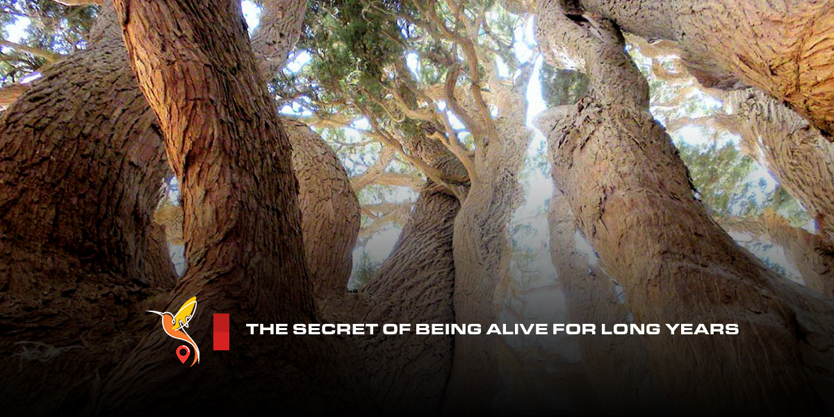 The-secret-of-being-alive-for-long-years