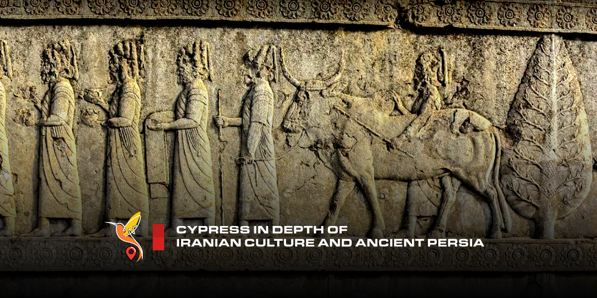 cypress-in-depth-of-iranian-culture-and-ancient-persia