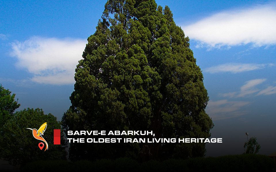 sarve-abarkuh-the-oldest-iran-living-heritage