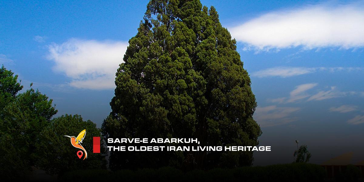 sarve-abarkuh-the-oldest-iran-living-heritage