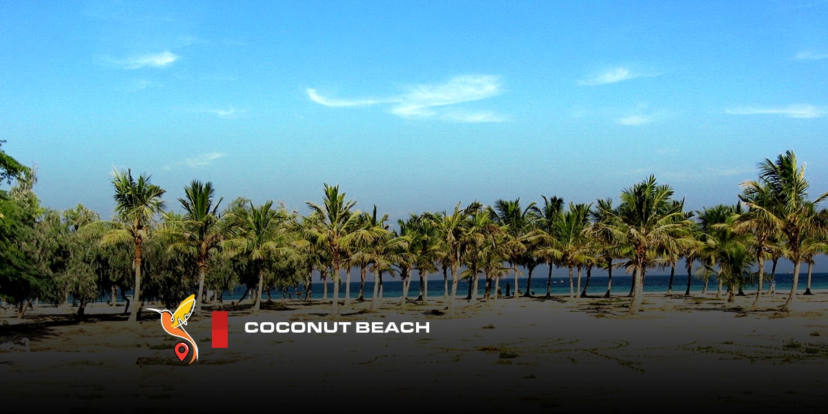 coconut beach in kish island in a sunny weather
