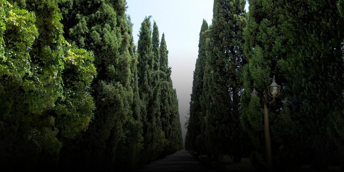 Shiraz-cypress-or-Sarv-e-Naz-from-the-Persian-poetry-to-Eram-garden-min