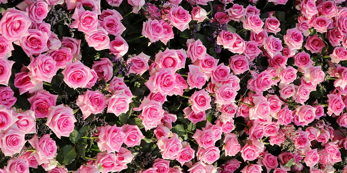 Persian flowers and their origins-min